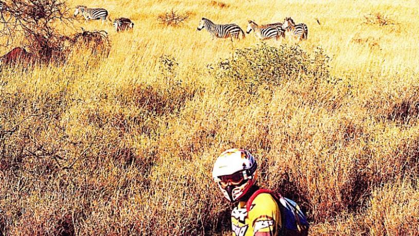 zebra versus rider