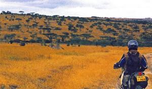 005-motard-+-zebre